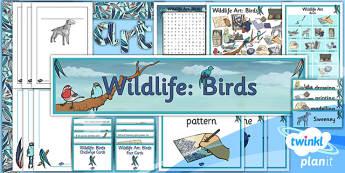 Art: Wildlife UKS2 Unit Additional Resources