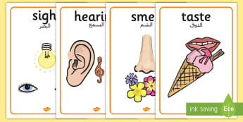 The Five Senses Posters Arabic Translation - arabic, five senses, posters