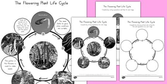 Flowering Plant Life Cycle - science, animals, KS2, seed, flowers, grow, growth