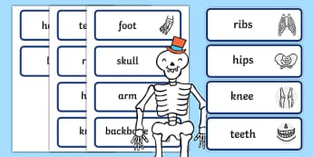 Body Part Word Cards to Support Teaching on Funnybones - word cards, funny bones, body