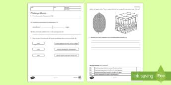 KS3 Photosynthesis Homework Activity Sheet - Homework, photosynthesis, plant nutrition, plant, leaf, adaptations, glucose, food, energy, chloroph