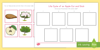 Life Cycle of an Apple Cut and Stick Activity Sheet - fall, Worksheet, autumn, growing, seasonal changes