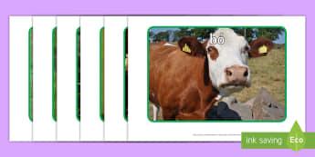 Farm Animals Display Photos Gaeilge - Irish, gaeilge, farm, feirm, ar an bhFeirm, animals, ainmhithe, ,Irish