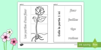 Fiche avec volets à ouvrir : les parties d'une fleur - printemps, plante, fleur, végétaux, le vivant, sciences, CE1, cycle 2, CP, CE2, plant, flower,Fren