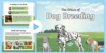 KS2  National Pet Month: The Ethics Of Dog Breeding PowerPoint - KS2 National Pet Month (April 2017), PSHE, Science, animals-ks2-topics, ks2-science-life-processes-a