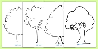 Tree Outline Worksheets - Tree Outline Worksheets, tree outline, worksheet, sheet, activity, trees, outline, colouring, filling in, different trees, type