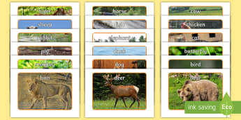 Animals Display Photos - A4 display posters, animal photographs, animal topic, carpet time discussions, activities, animal ph