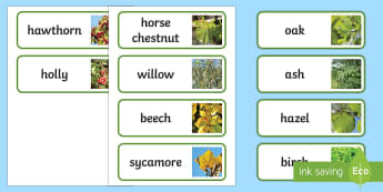 Irish Trees Word Cards - ROI- National Tree Week 5th - 12th March, trees, ireland, ash, oak, beech, sycamore, horse chestnut,