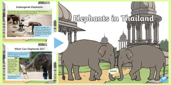 Thai Elephants PowerPoint - Thailand Songkran Festival 13th April, elephants, thailand, animals, information, powerpoint, presen