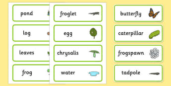 Life Cycle Word Cards (Combined) - Minibeast word cards, Word Card, Butterly, Frog, life cycle word cards, Frogspawn, Tadpole, Froglet, Frog, Minibeasts, Topic, Foundation stage, knowledge and understanding of the world, investigation, living things,