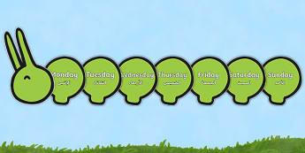 Days of the Week on Giant Caterpillar Arabic Translation - arabic, Caterpillar, Weeks poster, Months display, display, poster, frieze, Days of the week