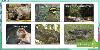 Ronald the Rhino Photo Pack - Twinkl originals, fiction, KS1, EYFS, rainforests, geography, animals