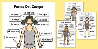 Póster DIN A4 de las partes del cuerpo - las partes del cuerpo, esquema, vocabulario
