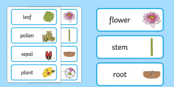 Parts of a Plant Word Cards - Parts of a Plant Word Cards - wordcards, plants, plant, part of a plant, vocab, living things, flowe