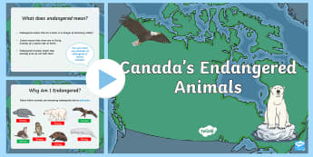 Canadian Animal Endangerment PowerPoint - Great Canadian Animals, animals, canada, endangered, endangerment, global warming, pollution, huntin