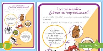 Hoja informativa: Los animales - ¿Cómo se reproducen? - animales, reproducción, clasificación, vivíparos, ovíparos ,Spanish