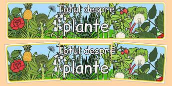 Totul despre plante - Banner - cultivarea plantelor, fișă, banner, de afișat, de perete, științe, observație, floare, părțile unei plante, creștere, dezvoltare, romanian, materiale, materiale didactice, română, romana, material, material didactic