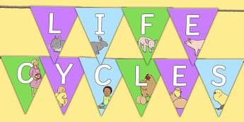 Life Cycles Themed Bunting - life cycles, bunting, display bunting, display