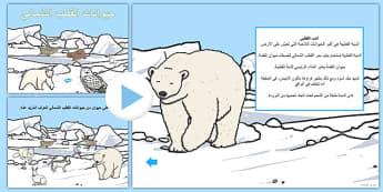 بوربوينت حيوانات القطب الشمالي - القطب الشمالي، مواطن الحيوانات