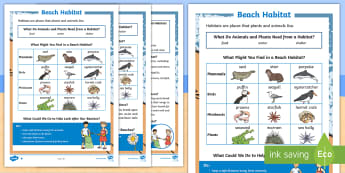 Beach Habitat  Differentiated Fact File - Seaside, Information, Lives, Plants, Animals
