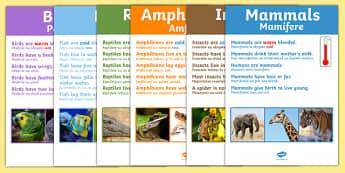 Animal Groups Display Poster Photos Romanian Translation - romanian, animal groups, display