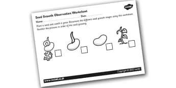 Seed Growth Worksheet - seed growth, seed growth observation, plant life cycle, stages of plant growth, growing beans, plant growth labelling worksheet