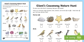 Giant's Causeway Nature Hunt Activity Sheet - The Causeway Coast, giant's causeway, ireland, roi, republic, irish, trip, nature, spotting, findin