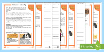 KS2 Pet Care of a Guinea Pig Differentiated Reading Comprehension Activity - KS2, comprehension, reading, reading comprehension, reading activity, pets, pet care, guinea pig, lo