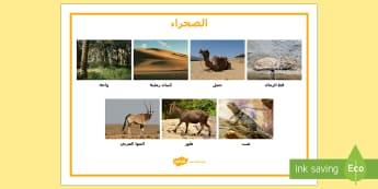 مفردات في الصحراء - الصحراء، حيوانات، صحراء، برية، عربي، مفردات,Arabic