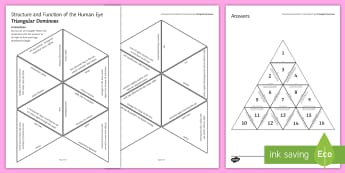 Structure and Function of the Human Eye Tarsia Triangular Dominoes - Tarsia, the human eye, structure of the eye, the eye, eye, function of the eye, parts of the eye, se, plenary activity, plenary activity