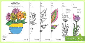 Plants and Growth Themed Mindfulness 2, 5 and 10 Times Tables Colour By Numbers Arabic/English - Plants and Growth Themed Mindfulness 2, 5 and 10 Times Tables Colour By Numbers - plants and growth,