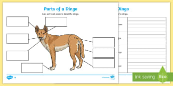 Parts of a Dingo Activity Sheets - Australian animals, animal parts, labeling animals, Australian fauna, ACSSU043, animal structure, an