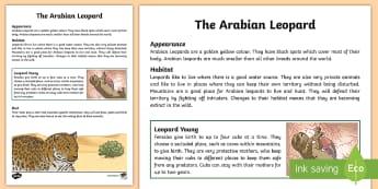 Arabian Leopard Fact File - Science, Living World, fact file, UAE, Arabian, animals, leopard, cat, big cat