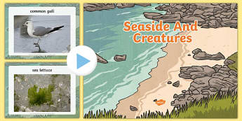 Seaside and Creatures Photo PowerPoint - seaside, the seaside, beach, sea creatures photo powerpoint, sea creatures, seaside photos, seaside powerpoint