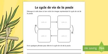 Images à remettre en ordre : Le cycle de vie de la poule - poule, cycle de vie, sciences, cycle 1, cycle 2, cycle 3, hen, chicken, life cycle, Pâques, Easter,