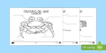 Bajo el mar Ficha de emparejar palabra con dibujo - Bajo el mar, proyecto, las partes de la pez, las partes del pulpo, las partes del crangrejo, Spanish