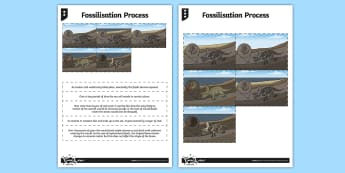 Fossilisation Process Activity Sheet - activity, fossilisation, process, worksheet