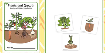Plants and Growth Counting to 10 Cut and Paste Booklet - counting