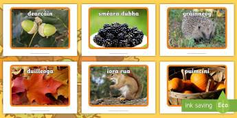 Autumn Display Photos Gaeilge  - fómhar, aimsir, weather, séasúr, season, ,Irish