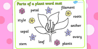 Parts of a Plant Word Mat - Plant, Growth, Word Mat, Topic, Foundation stage, knowledge and understanding of the world, living things, labelling, labelling plant