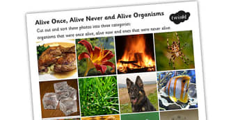 Alive Once Alive Never Alive Organisms Photo Sorting Activity - living things, living things sorting activity, alive or not alive activity, science games