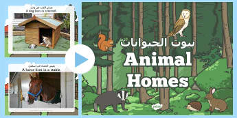Animal Homes PowerPoint Arabic/English - Animal Homes Powerpoint - animal homes, animal habitats, where animals live, where different animals