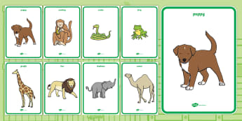 Display Posters to Support Teaching on Dear Zoo - Dear Zoo, Rod Campbell story, zoo, zoo animals, adjectives, descriptive words, lion, monkey, puppy, giraffe, story book, story book resources, story sequencing, story resources, zoo, animals, Display