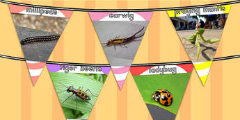 Minibeasts Display Photo Bunting - display bunting, flags, photos
