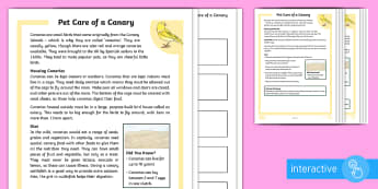 KS2 Pet Care of a Canary Differentiated Comprehension Go Respond  Activity Sheets - KS2 National Pet Month (April 2017),pet care, owning a canary, looking after a bird, canaries, pets,