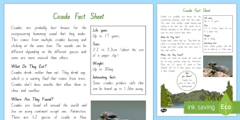 Cicada Fact File - New Zealand, minibeasts, insects, bugs, minibeast, year 1, year 2, year 3, science, nature, living w