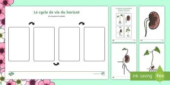 Images à ordonner : le cycle de vie du haricot - printemps, plante, fleur, végétaux, le vivant, cycle de vie, reproduction, cycle 3, cycle 1, cycle