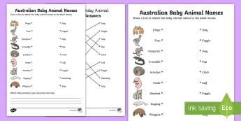 Australian Baby Animal Names Activity Sheet - worksheet, lifecycle, life stages, animal growth, ACSSU030, animal reproduction, Australian fauna ,A