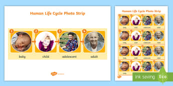 Human Life Cycle Photo Strip Poster format A4 - human, life cycle, photo, lfe cycles, child, baby, adult, teenager, growing, getting older, changes