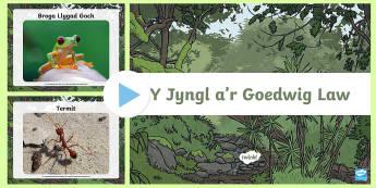 Pŵerbwynt Ffotograffau Anifeiliaid Y Jyngl a'r Goedwig Law - rainforest, coedwig, law, anifeiliad, ffotograffau, gorila, tapir,Welsh